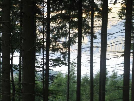 Foto 6: Pohled od údolí – Branná – Ostružná