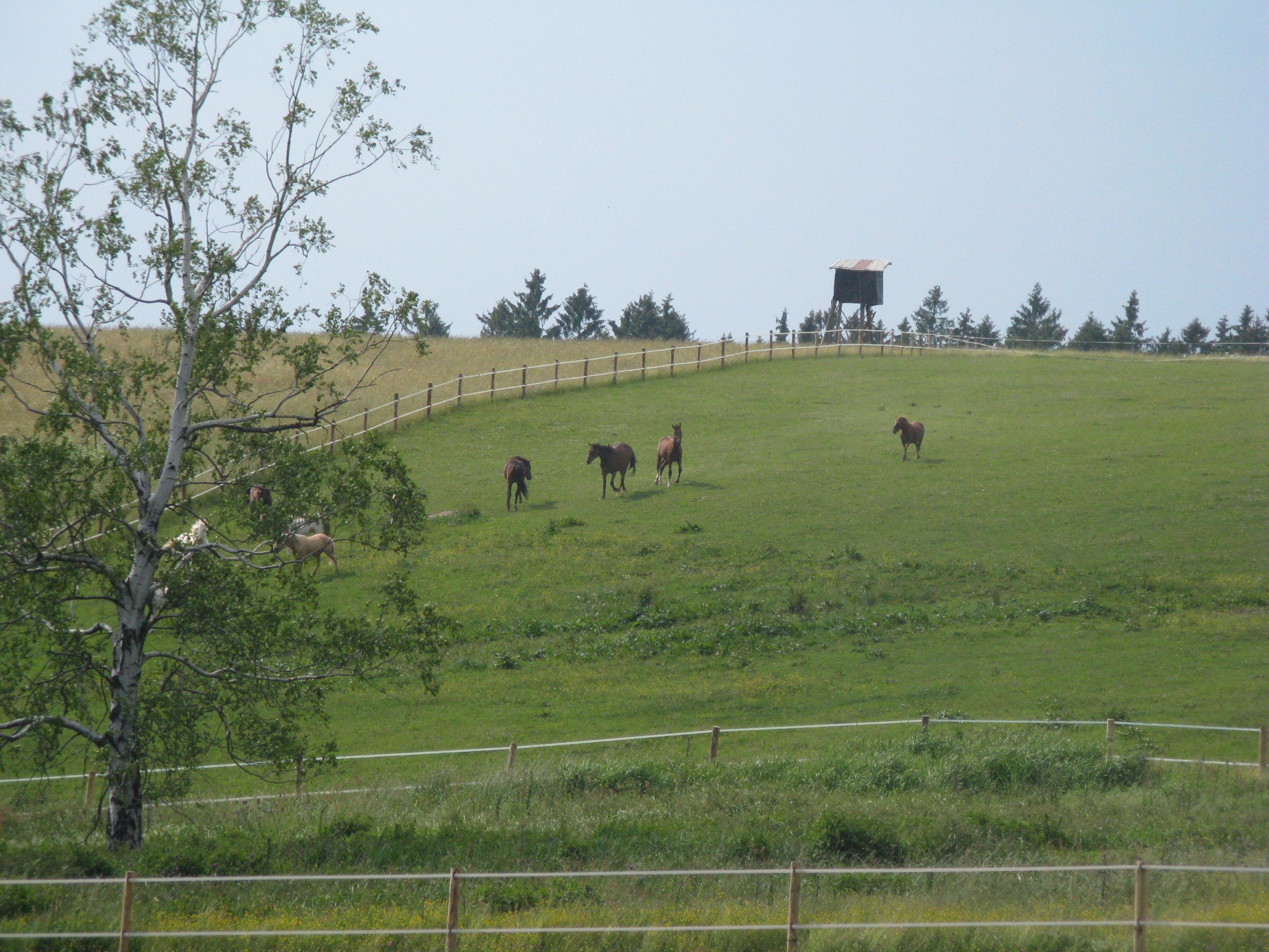 Foto 3: Asi bych jí ukecal, jen pokud by k té chaloupce patřila i tahle ohrada, koně má ráda.