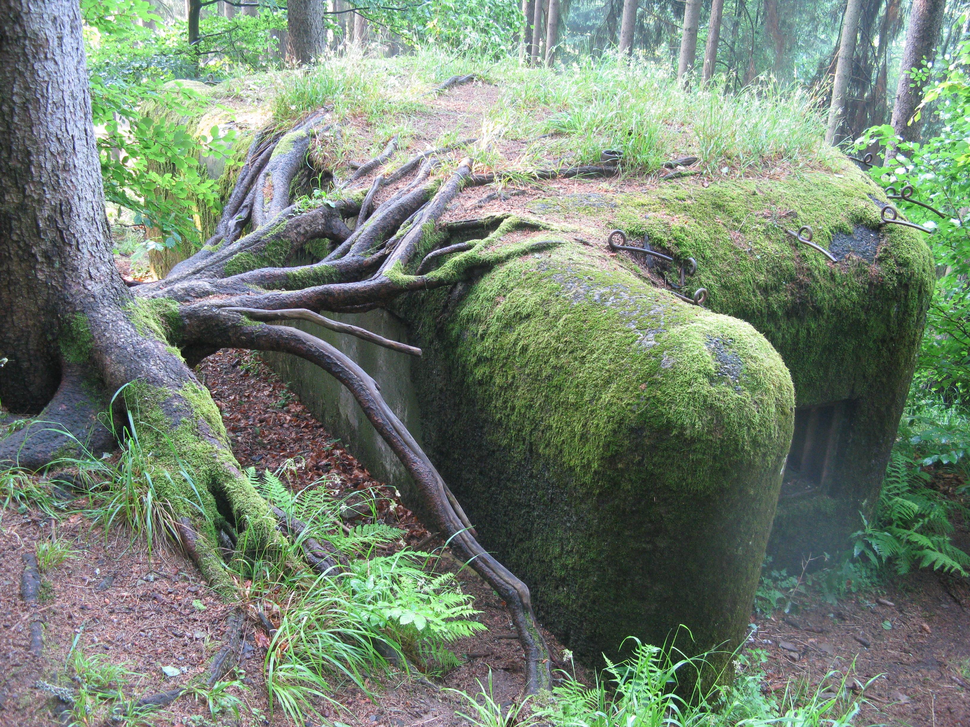 """Foto 10: jeden s řopíků ve stráni nad údolím Divoké Orlice, je vidět že přírodu nějaké naše """"pomníky"""" minulosti moc netrápí, ona si nějak poradí …"""
